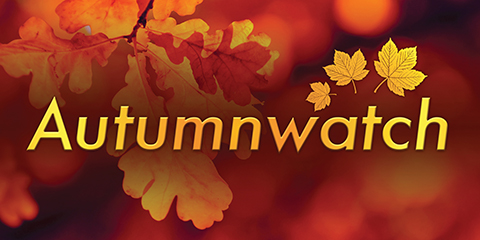 B009-2066-Autumnwatch-case-study_wide1-ourwork.jpg